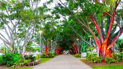 Cairns - Allée d'arbres