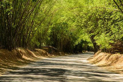 Bamboo avenue, Jamaïque