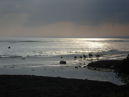 Promenade nocturne sur la plage de Lovina