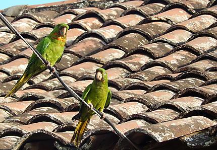 Ometepe - Autour d'Altagracia