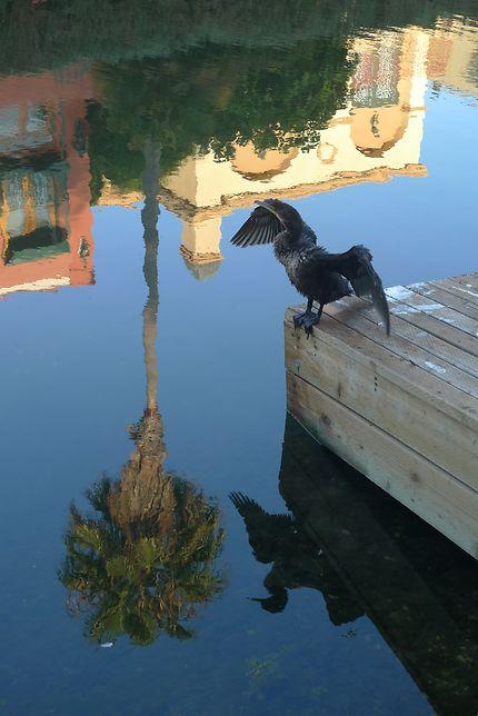 Lui aussi se sêche au soleil de Venice Beach