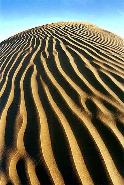 dune tigrée