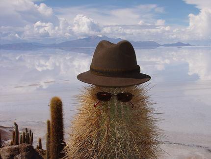 Cactus du Salar