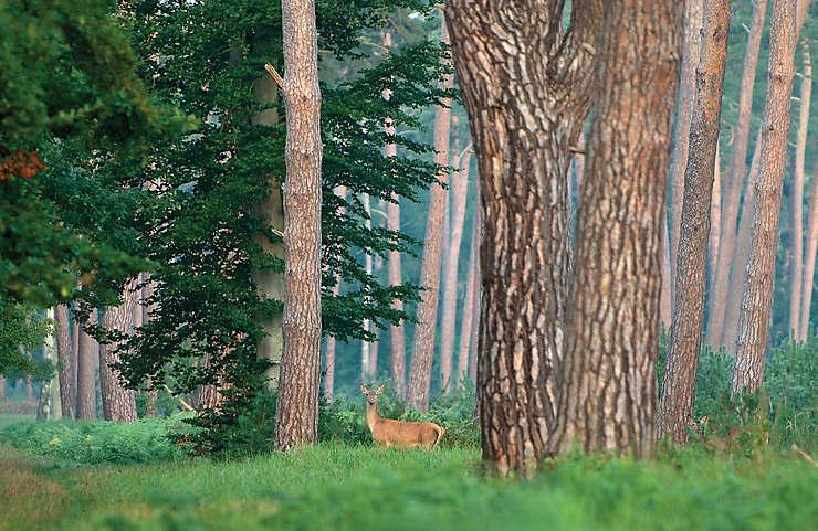 Compiègne et sa forêt : un week-end royal !