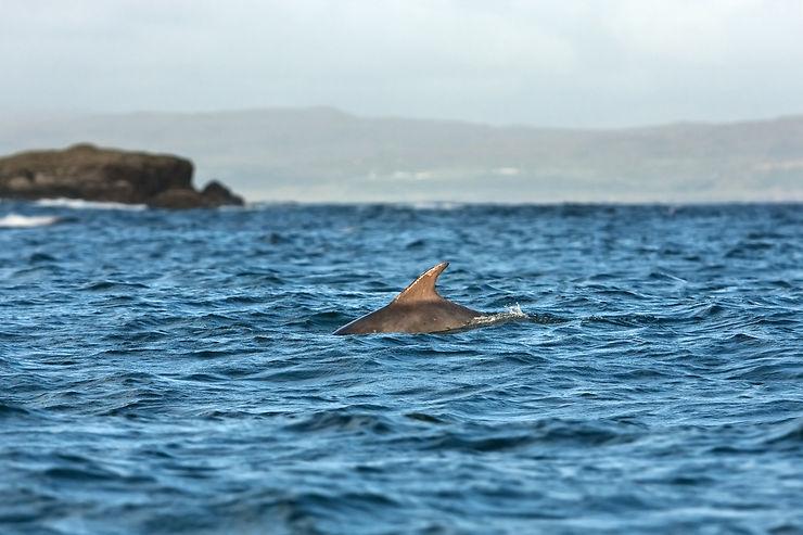 Écosse - Une route des baleines dans les îles Hébrides