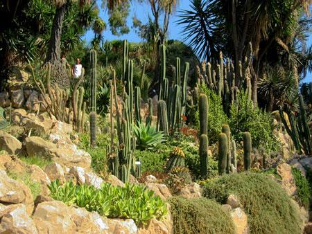 Jardin botanique d 39 hanbury plantes jardin botanique d - Jardin d italie chateauroux ...