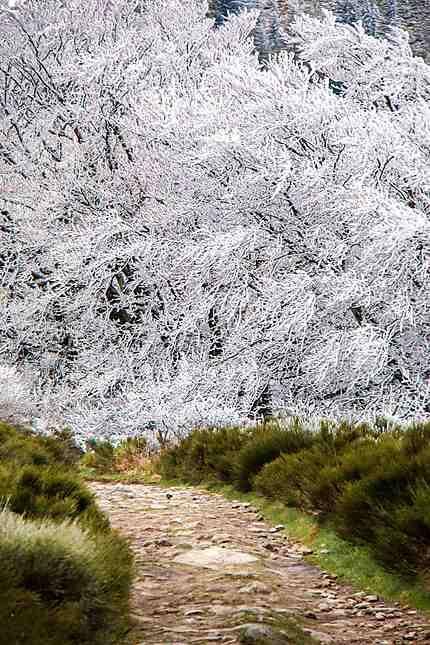 Massif du Pilat - Chemin vers l'hiver