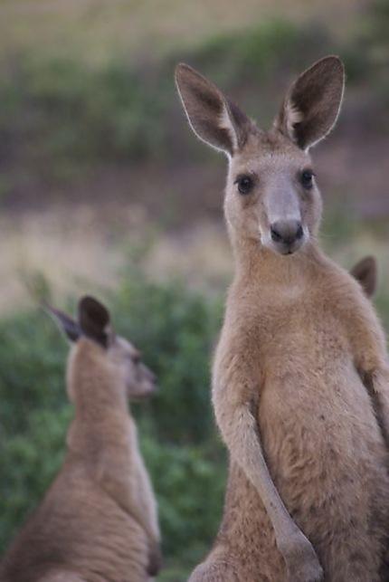 Australie me voilà !