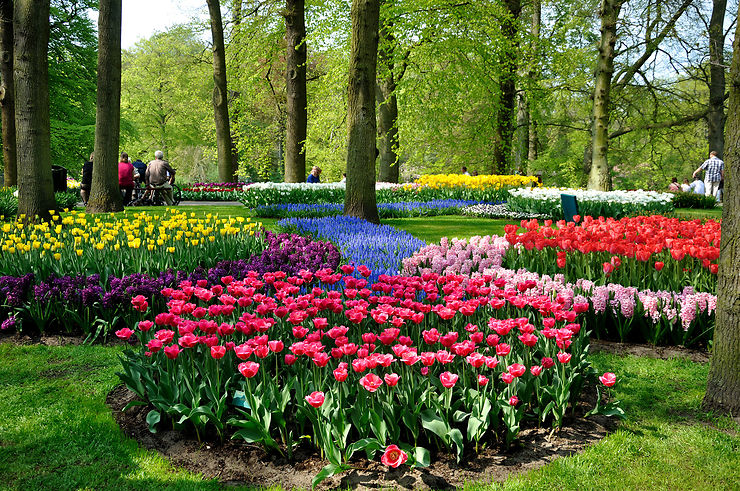 Pays-Bas, au pays de la tulipe