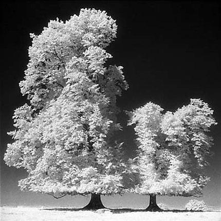 Deux arbres sur un plateau en été