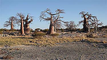 Parc transfrontalier de Kgalagadi