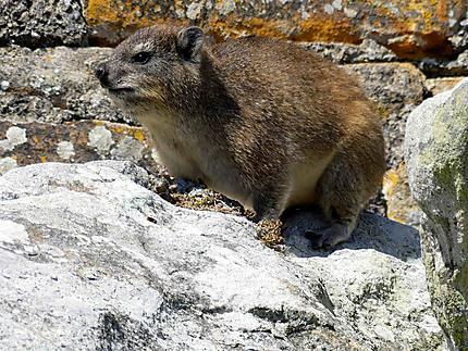 Petite bête sur le rocher