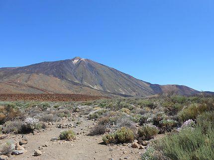 Volcan du Teide, Tenerife