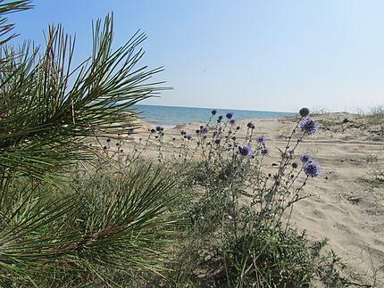 Au bord de la Mer Noire