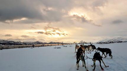 Chiens de traîneaux autour de Tromso