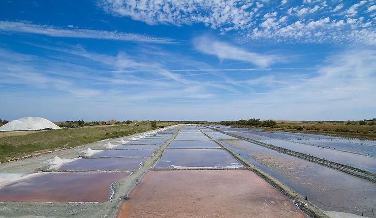 L'île de Ré, plages et marais salants - Charente-Maritime (Poitou-Charentes)