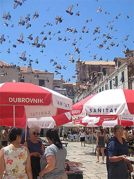 Dubrovnik - Place Zelena