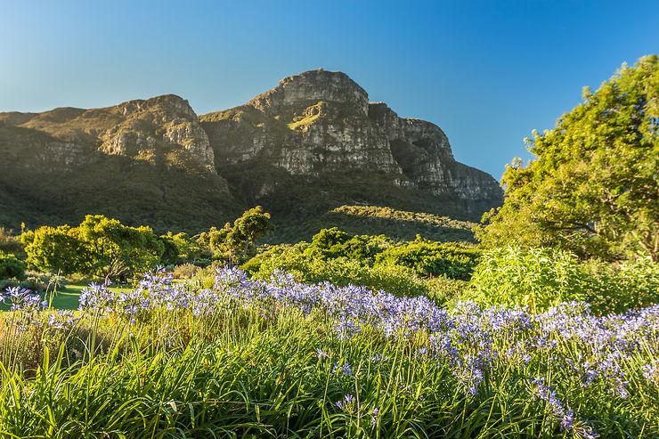 Kirstenbosch National Botanical Garden - Afrique du Sud