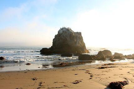 Pelicans bruns sur leur rocher