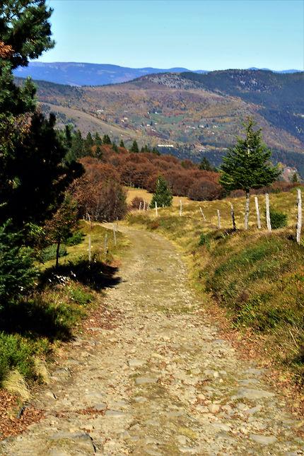 Chemin de randonnée dans les Vosges