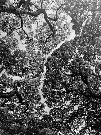 Canopée à Ciel au vert - Negombo