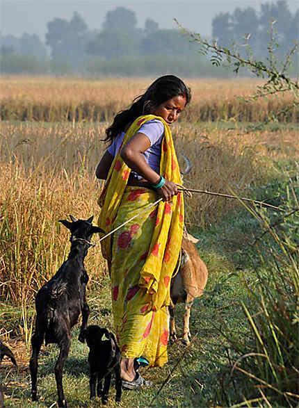 La femme aux chèvres