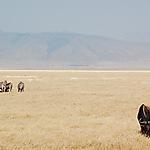 Vue sur le Ngorongoro