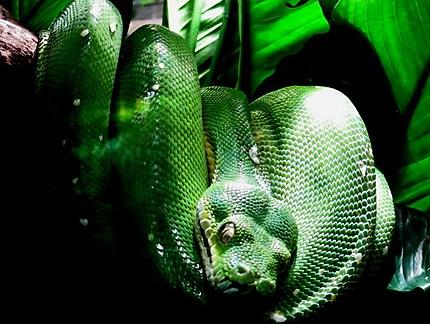 Zoo du jardin des plantes (vivarium)