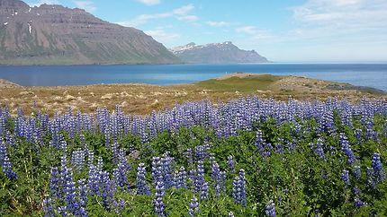 Fjord de Skalanes