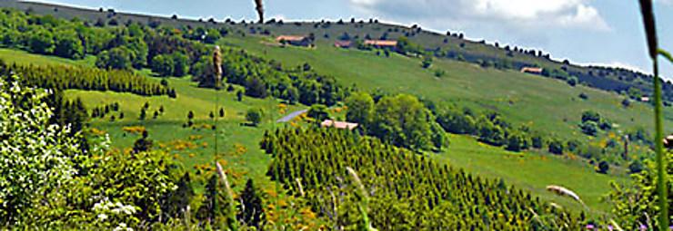 Auvergne, au pays de la fourme d'Ambert