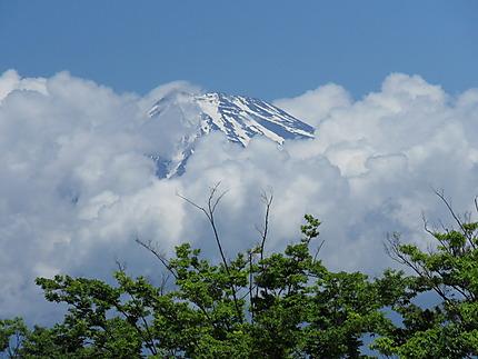 Fuji coiffé