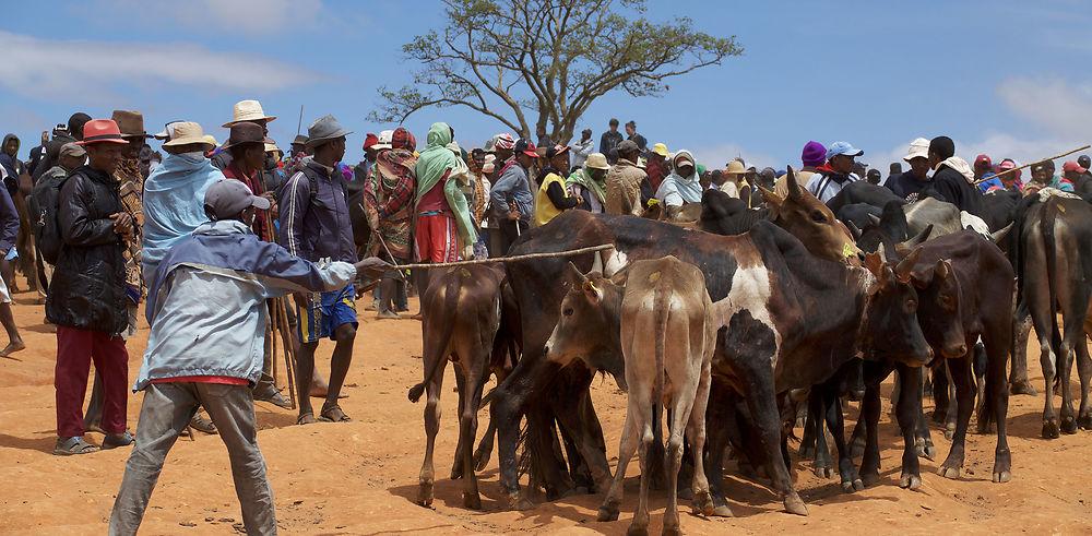 Ambalavao et son marché aux zébus
