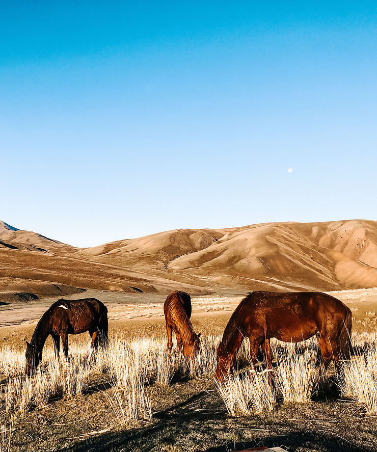 Premiers rayons de soleil en pleine nature kirghize