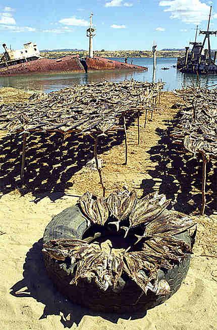Morues sèchant dans le port de Diego