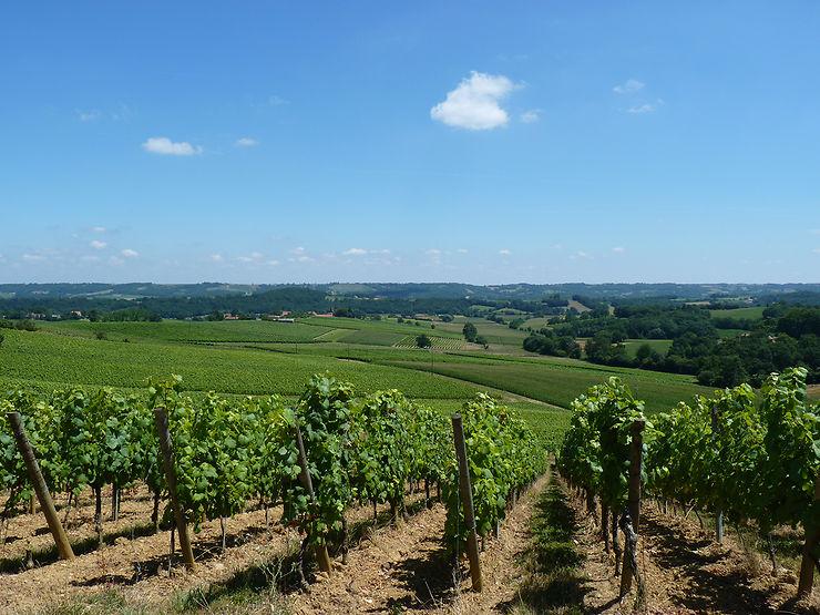 Pacherenc et madiran, les vins du Vic-Bilh