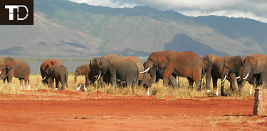 Voyage sur-mesure au Kenya