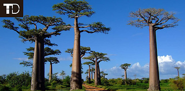 Voyage sur-mesure à Madagascar