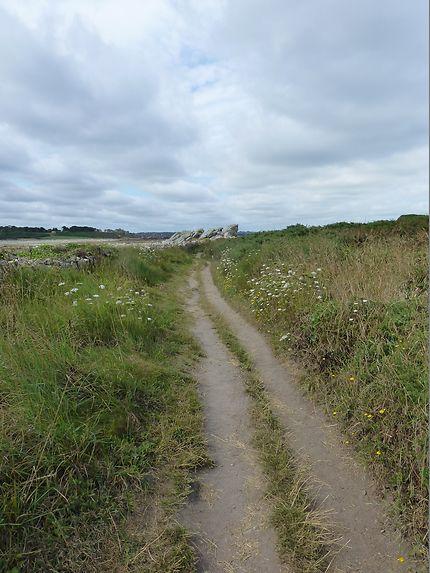 Chemin sauvage à Plougrescant, en Bretagne