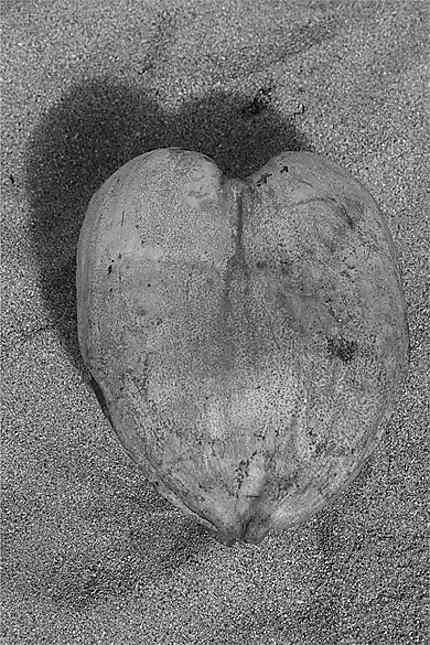 Coeur de coco