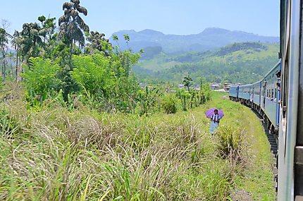 Train de Kandy à Ella