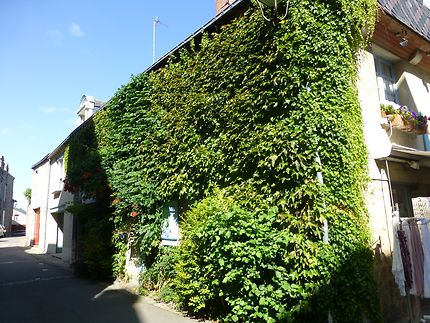 Façade végétale à Guérande