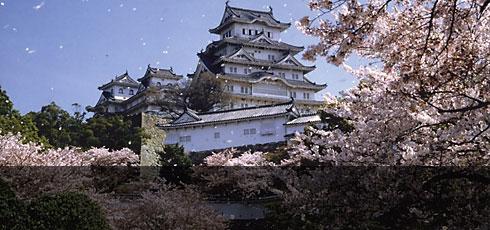 Les cerisiers en fleurs au Japon - Yasufumi Nishi - JNTO