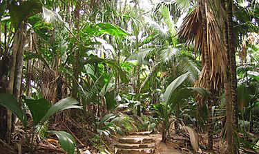 Vallée de Mai (Praslin)