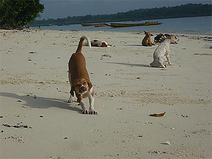 Streaching on the beach