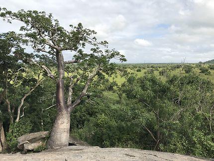 Baobab sur une des collines de Shai Hills Reserve