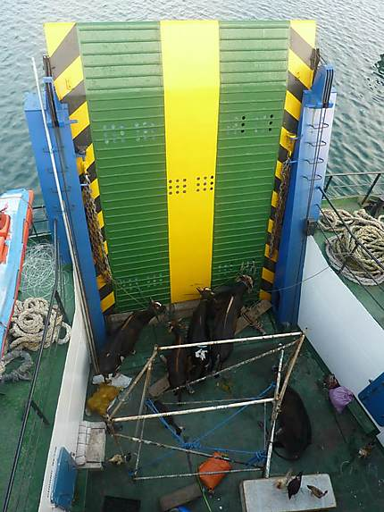 Le ferry Ampana-Wakai-Gorontalo