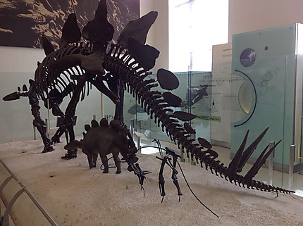 Musée d'histoire naturelle à New York