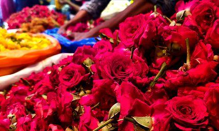 Les mains dans les fleurs