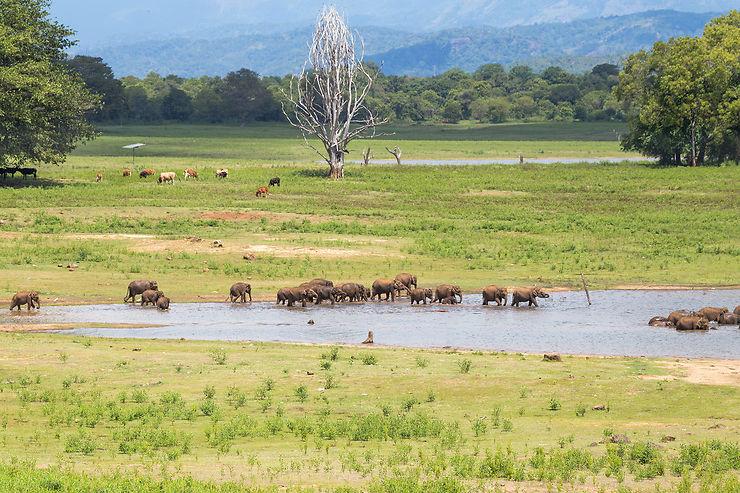 Les animaux du parc national Uda Walawe