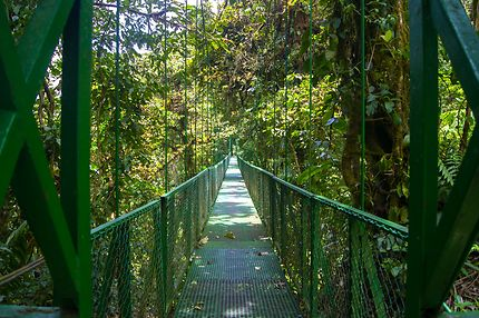 Hanging Bridge, Monteverde, Costa Rica